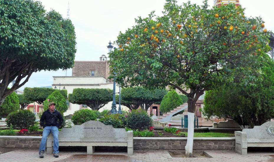 orange trees in the centro