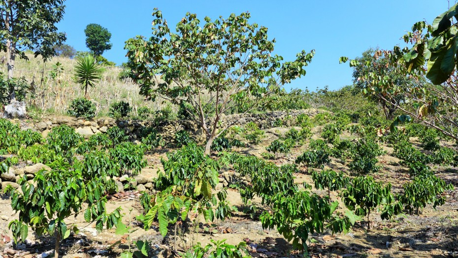 another coffee finca
