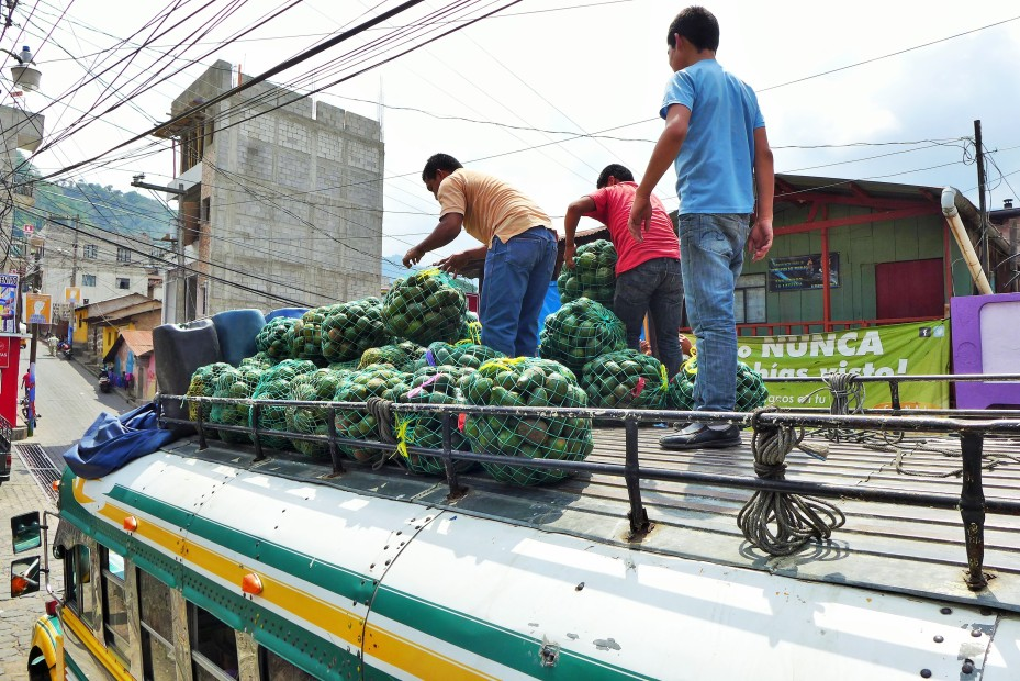chicken bus loaded with passengers below and avocados roof top.