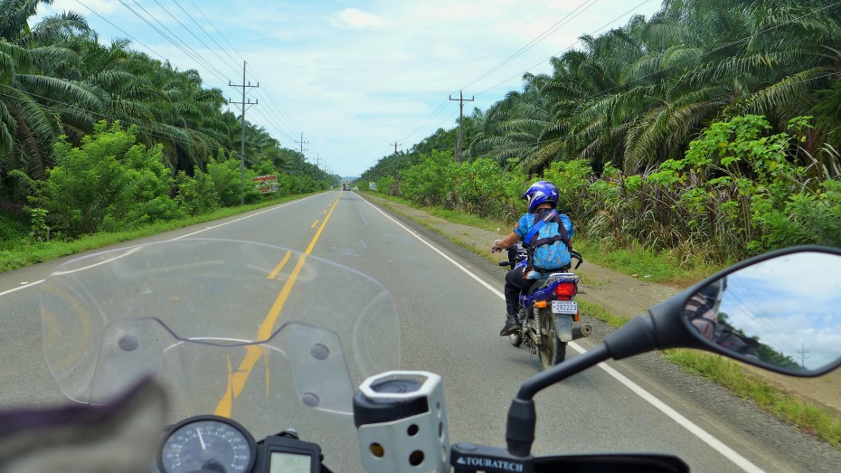 kilometers and kilometers of palm tree farms lined this stretch of highway