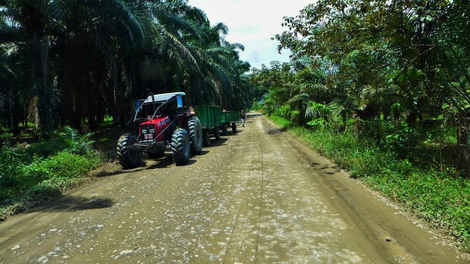 bug business hauling palm tree nuts