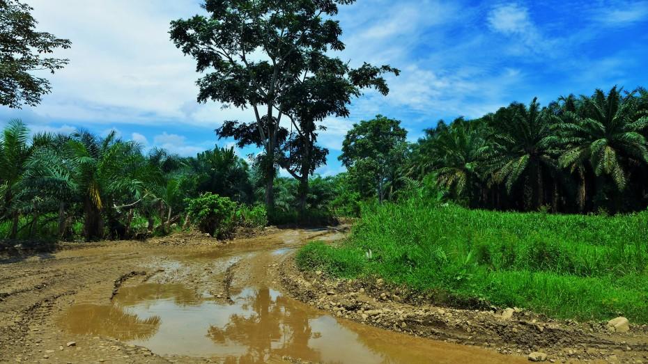 heading deeper into palm tree farm land