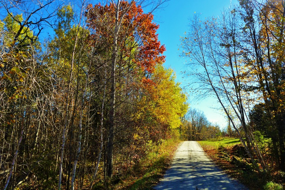 colours of fall at Bennett lake