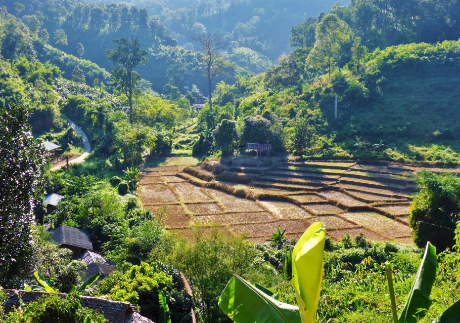rice paddies everywhere up here