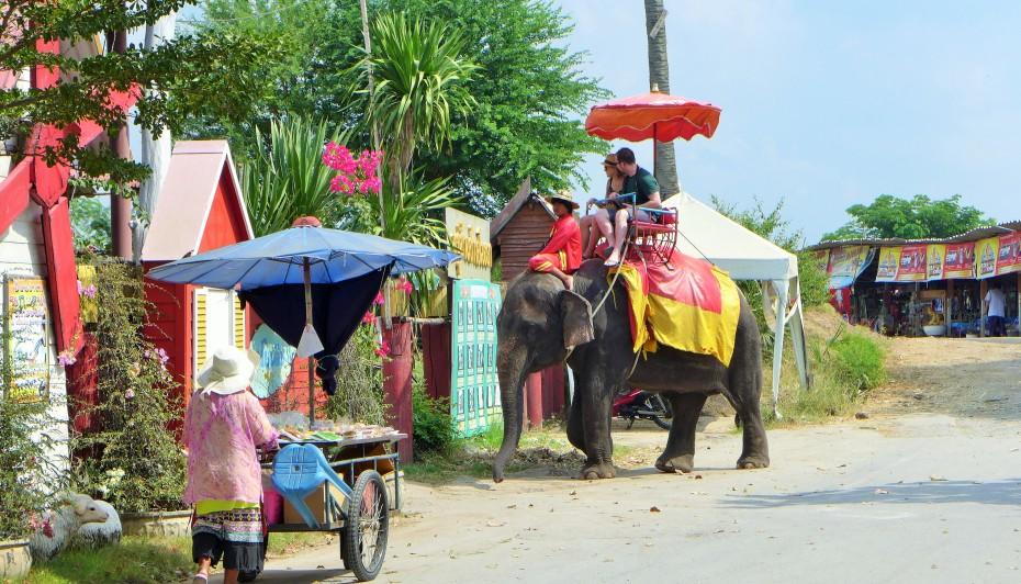 elephants elephants everywhere