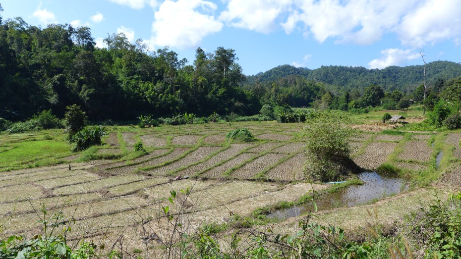 the rice paddies were nit being worked here at this time